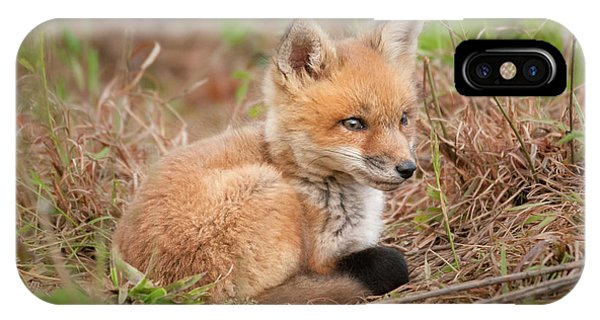Red Fox Kit - Watchful #1 IPhone Case