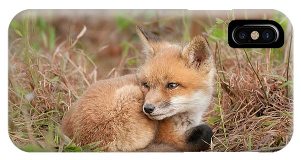 Red Fox Kit - Watchful #2 IPhone Case