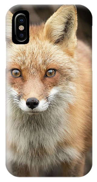 Cunning iPhone X Case - Red Fox Stare by Everet Regal