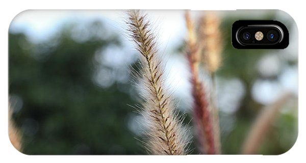 Red Grass - Pennisetum Setaceum 'rubrum' IPhone Case