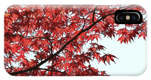 IPhone Case featuring the photograph Red Japanese Maple Leaves by Debi Dalio