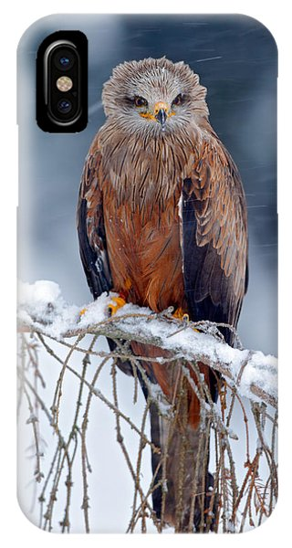 Swedish iPhone Case - Red Kite, Milvus Milvus, Sitting On The by Ondrej Prosicky