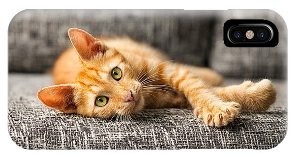 Small Business iPhone Case - Red Kitten Lying On Bed And Looking At by Lucky Business