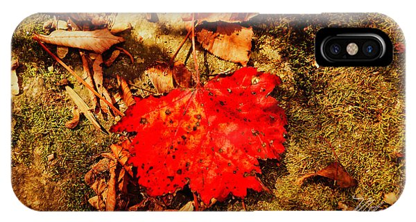 Red Leaf On Mossy Rock IPhone Case