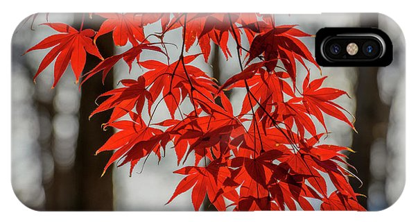 IPhone Case featuring the photograph Red Leaves by Cindy Lark Hartman