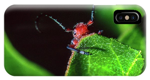 IPhone Case featuring the photograph Red Milkweed Beetle by Jeff Phillippi