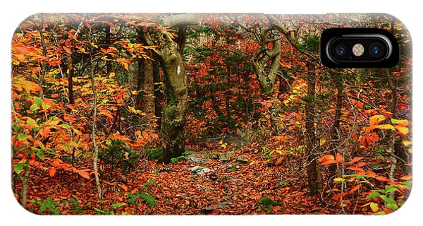IPhone Case featuring the photograph Red Oaks And At Blaze Horizontal by Raymond Salani III