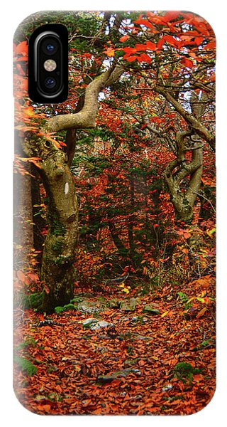 IPhone Case featuring the photograph Red Oaks And At Blaze Vertical by Raymond Salani III