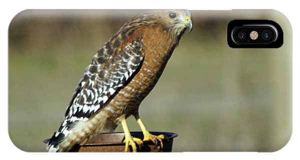 IPhone Case featuring the photograph Red-shouldered Hawk by Ben Upham III