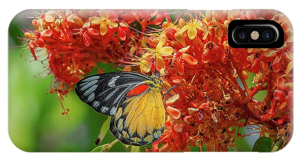 IPhone Case featuring the photograph Red-spot Jezebel Butterfly Dthn0235 by Gerry Gantt