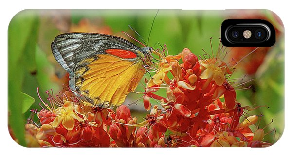 IPhone Case featuring the photograph Red-spot Jezebel Butterfly Dthn0236 by Gerry Gantt