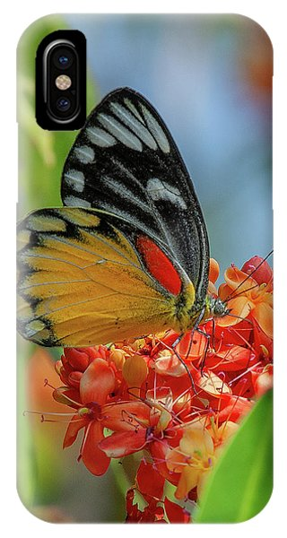 IPhone Case featuring the photograph Red-spot Jezebel Butterfly Dthn0237 by Gerry Gantt