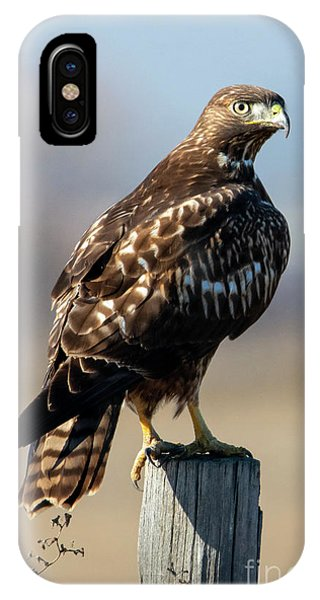 Red Tail Hawk iPhone Case - Red-tail Perch by Mike Dawson