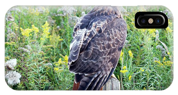 Red-tailed Hawk On Fence Post IPhone Case
