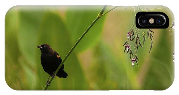 Red-winged Blackbird On Alligator Flag IPhone Case