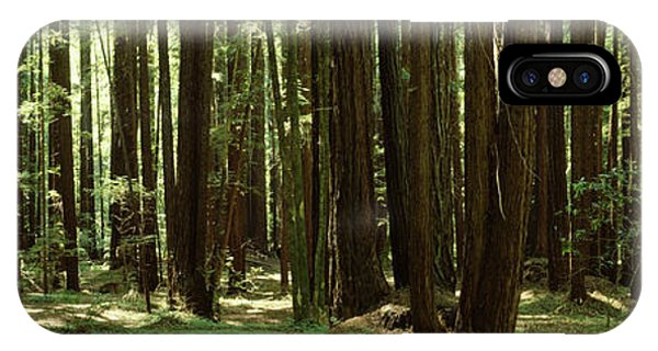 iPhone Case - Redwood Trees Armstrong Redwoods St by Panoramic Images