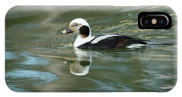 Reflecting On A Long-tailed Duck #1 IPhone Case