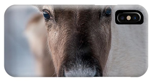 Swedish iPhone Case - Reindeer In Its Natural Environment In by V. Belov
