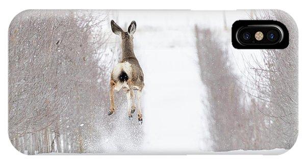 Mule Deer iPhone Case - Reindeer In Training by Mike Dawson