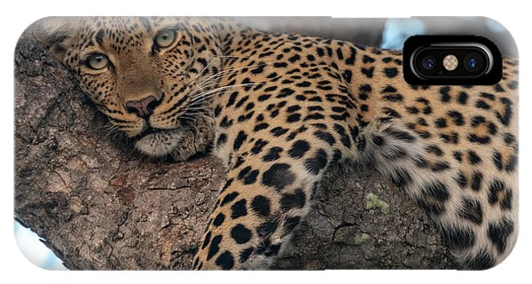 Relaxed Leopard IPhone Case