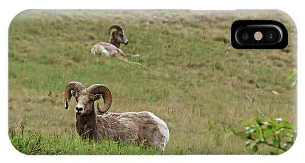 Rocky Mountain Bighorn Sheep iPhone Case - Resting Bighorn Sheep by Robert Bales