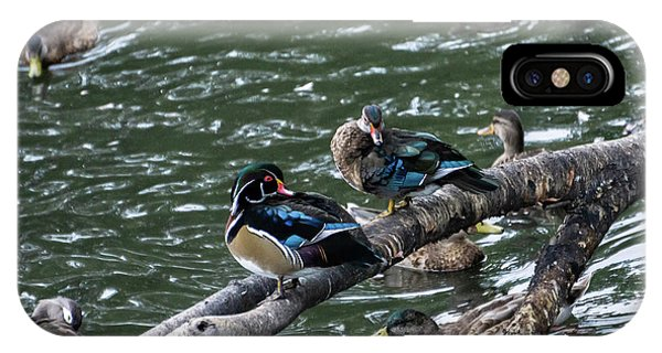 Lake iPhone Case - Resting Ducks by Rob Olivo