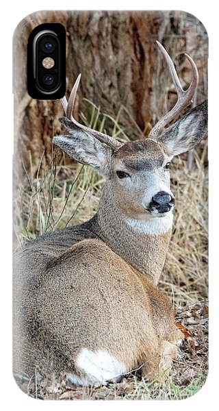Mule Deer iPhone Case - Resting Two-point by Mike Dawson