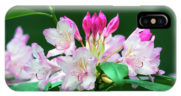 IPhone Case featuring the photograph Rhododendron 2 by Leland D Howard