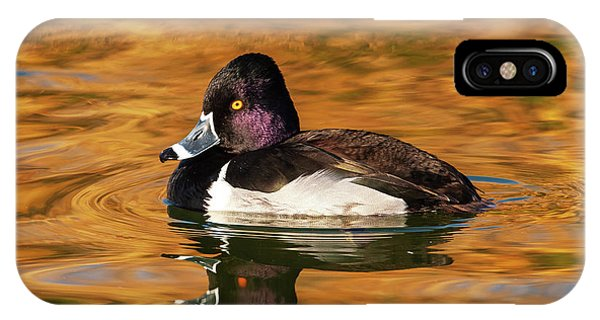 Ring-necked Duck IPhone Case