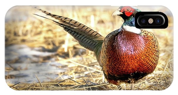 Ring-necked Pheasant Portrait IPhone Case