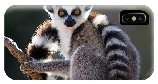 Zoology iPhone Case - Ring-tailed Lemur Sitting On A Tree by Gudkov Andrey