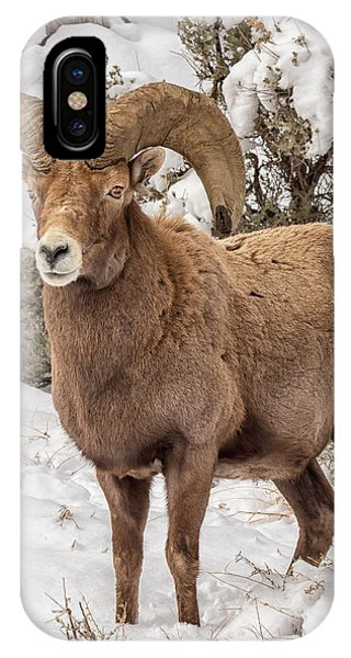 Rio Grande Bighorn IPhone Case