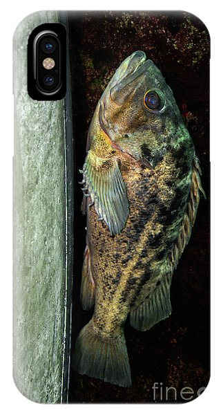 Rockfish Relaxing IPhone Case