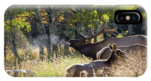 Rocky Mountain Bull Elk Bugeling IPhone Case