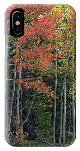 IPhone Case featuring the photograph Rocky Mountain Forest Reds by James BO Insogna