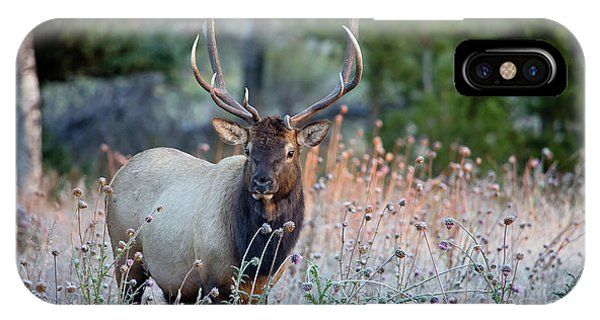 Rocky Mountain Wildlife Bull Elk Sunrise IPhone Case