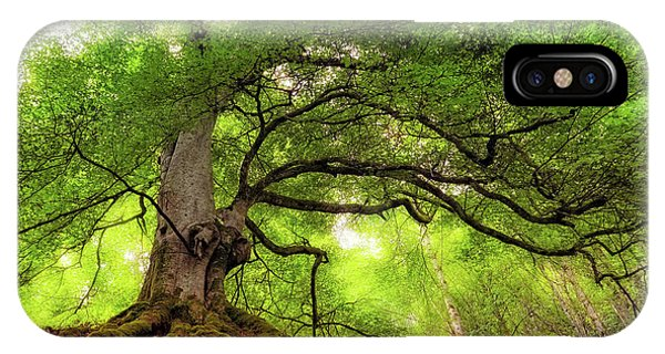 Roots Of Taymouth Estate - Scotland - Beech Tree IPhone Case