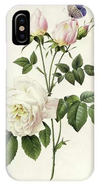 Redoute iPhone Case - Rosa Bengale The Hymenes By Redoute by Pierre Joseph Redoute