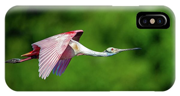 IPhone Case featuring the photograph Roseate Spoonbill by Jeff Phillippi