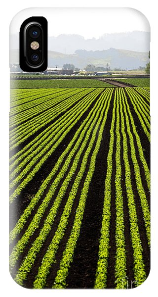 Rows Of Freshly Planted Lettuce In The Phone Case by Dwight Smith