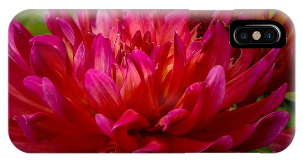 Ruby Red Dahlia IPhone Case