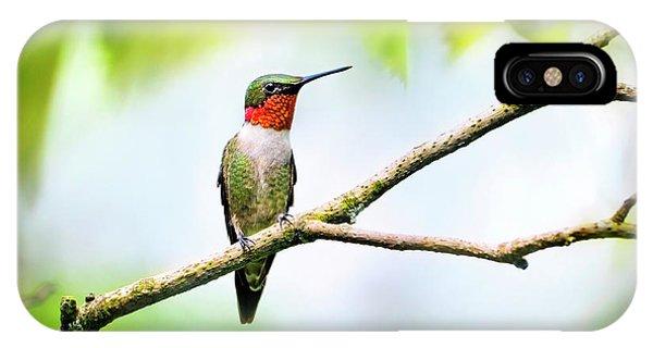 Beautiful Hummingbird iPhone Case - Ruby Throated Hummingbird by Christina Rollo