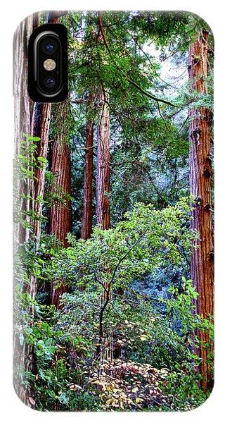 Samuel Taylor Redwoods 1 IPhone Case