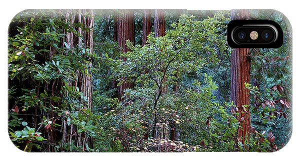 Samuel Taylor Redwoods 2 IPhone Case