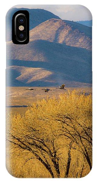 Sandhill Cranes Near The Bosque IPhone Case
