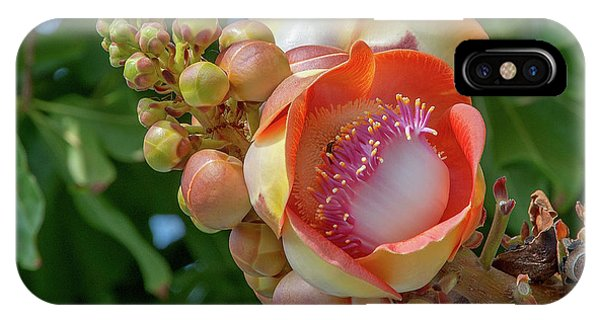 IPhone Case featuring the photograph Sara Tree Or Cannonball Tree Flower And Buds Dthn0264 by Gerry Gantt