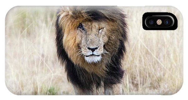 iPhone Case - Scar The Lion by Jane Rix
