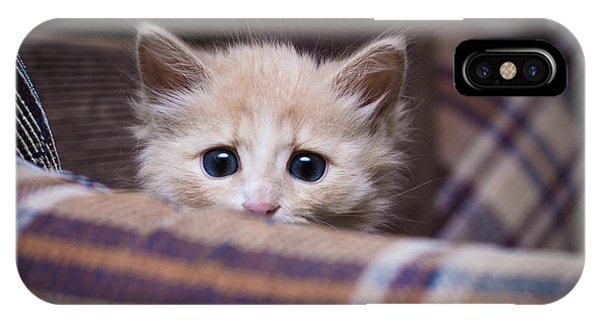 View Point iPhone Case - Scared Kitten Hiding At Home by Khamidulin Sergey