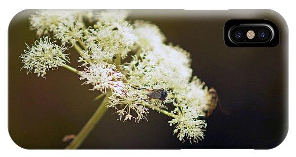 Scotland. Loch Rannoch. White Flowerhead. IPhone Case