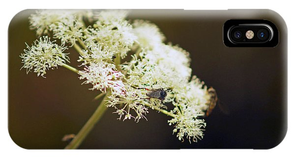 Scotland. Loch Rannoch. White Flowerhead. IPhone Case